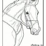 Gypsy Coloring Pages New Coloring Pages Horses – Financialsolutionsub