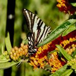 Lisa Frank Tiger Amazing Best Shots Register & Bee Reader Submitted Photos
