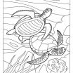 Lizard Color Page Beautiful √ the tortoise Coloring Pages for Adult and Fish Coloring Pages for