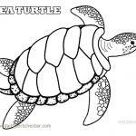 Lizard Color Pages Inspirational Coloring Pages Turtle Elegant Awesome Sea Turtle Coloring Page