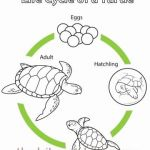 Lizard Color Pages Inspirational Coloring Pages Turtle Inspirational Adult Coloring Pages Turtles