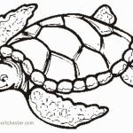 Lizard Color Pages Inspirational Coloring Pages Turtle Unique Sea Turtles Coloring Pages Realistic