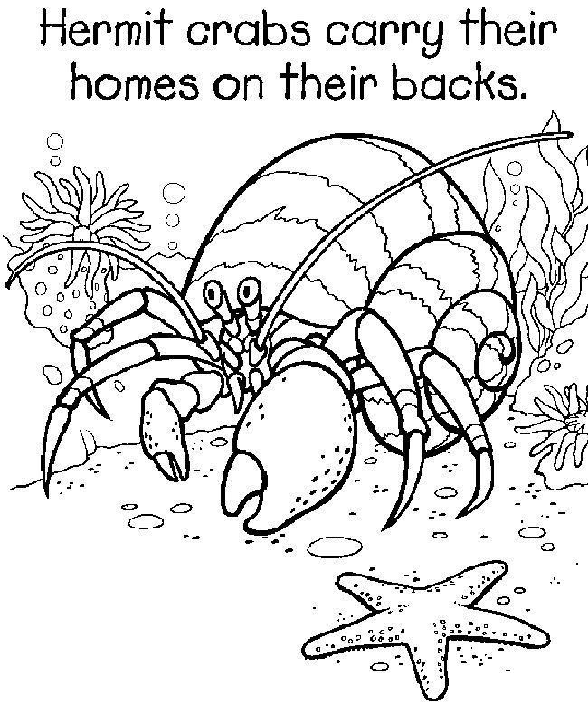 Mr Krabs Coloring Pages Fresh Eric Carle Mister Seahorse Coloring Pages Luxury Hermit Crab