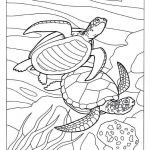 Ninja Turtles Color Pages Creative Lovely Sea Turtle Coloring Pages Nocn