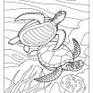 Ninja Turtles Coloring Pages Excellent Lovely Sea Turtle Coloring Pages Nocn