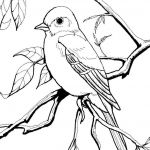 Oriole Coloring Page Awesome Free Coloring Pages Birds
