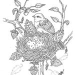 Oriole Coloring Page Creative Adult Coloring Page Bird with Bird S Nest original Art Digital