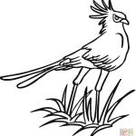 Oriole Coloring Page Excellent Hoatzin Coloring Pages