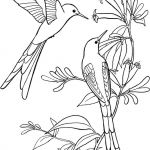 Oriole Coloring Page Excellent Hummingbird Coloring Page Best Dove Coloring Pages Hummingbirds