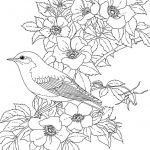 Oriole Coloring Page Inspiring Bird and Flower Coloring Pages