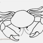 Oriole Coloring Page Wonderful 16 Luxury Crab Coloring Pages