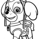 Paw Patrol Color Excellent Skye Paw Patrol Coloring Pages Fresh 393 Best Free Printable