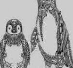 Pengiun Coloring Page Elegant 15 Fresh Penguin Coloring Pages Kanta