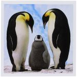 Penguin Pictures to Print Excellent Amazon 3drose Emperor Penguin Family Greeting Cards 6 X 6