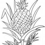 Pineapple Coloring Book Awesome Coloring Pages Of Pineapple Ria Crafts