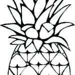Pineapple Coloring Book Inspiration Part 150 Zootopia Judy Hopps Coloring Pages