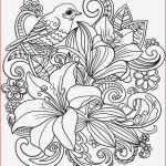 Poppy Coloring Pages Brilliant Flowers Drawing Free Flower Coloring Pages Printable Cool