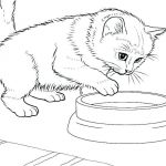 Puppies and Kittens Coloring Pages Inspiring Kitten Coloring Pages – Trustbanksuriname