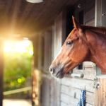 Race Horse Coloring Pages Elegant Horse S Eyes and Vision