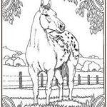 Race Horse Coloring Pages Inspirational 1406 Best Horse Coloring Pages Images In 2017
