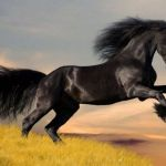 Race Horse Coloring Pages Inspired Cool Horse Name Ideas
