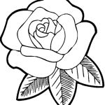 Rose Coloring Pages Brilliant Rose Flower Drawing Step Step at Getdrawings