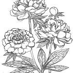 Rose Coloring Pages Inspired Peony Flower Coloring Pages Download and Print Peony Flower