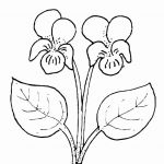 Rose Flower Coloring Pages Excellent How to Draw A Rose Step by Step Elegant Simple Flower Coloring Pages