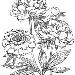 Rose Flower Coloring Pages Inspired Peony Flower Coloring Pages Download and Print Peony Flower