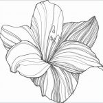 Rose Flower Coloring Pages Inspired Rose Flower Shop