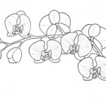 Sexy Coloring Pages Creative Flowers Drawing Easy with Color Easy to Draw Instruments Home