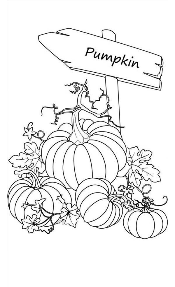 Shopkins Pumpkin Halloween Exclusive Luxury Scarecrow and Pumpkin Coloring Pages – Howtobeaweso