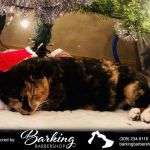 Tinkerbell Christmas Trees Best S Love Your Pet Day 2019 S