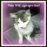 """Toulouse the Kitten Creative It S Raining Cats and Dogs In West Virginia 7 15 11"""" Hinesville Ga"""