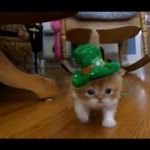 Toulouse the Kitten Inspirational 2012 03 25t03 32 29 02