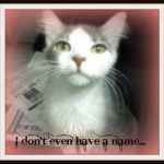 """Toulouse the Kitten Inspirational It S Raining Cats and Dogs In West Virginia 7 15 11"""" Hinesville Ga"""