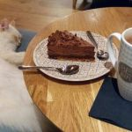 Toulouse the Kitten Pretty Chat Dort Picture Of Chapristea toulouse Tripadvisor