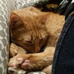 Toulouse the Kitten Wonderful Chat Dort Picture Of Chapristea toulouse Tripadvisor