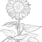 Transparent Coloring Pages Marvelous 20 Aesthetic Coloring Sheets Sunflowers Ideas and Designs