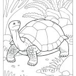 Unicorn Adult Coloring Pages Inspirational Eye Brawl Skylander Coloring Page Pages Design for Adults Flowers