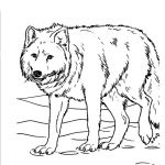 Wolf Coloring Pages Realistic Awesome Realistic Animal Coloring Pages Saglik