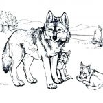 Wolf Coloring Pages Realistic Fresh Awesome Wolf Coloring Pages to Print Printable Realistic for Adults