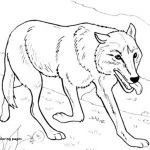 Wolf Coloring Pages Realistic Inspirational Coloring Pages for Teenagers – Page 47 – Coloring Pages Online
