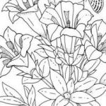 Zootopia Color Pages Inspired Cool Vases Flower Vase Coloring Page Pages Flowers In A top I 0d